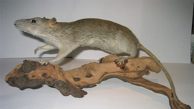 You have the taxidermist on speed dial