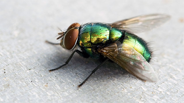 """A fly was very close to being called a """"land,"""" cause that's what they do half the time."""