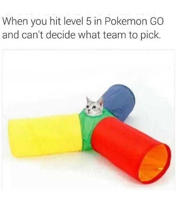 Cat, picking teams after level 5