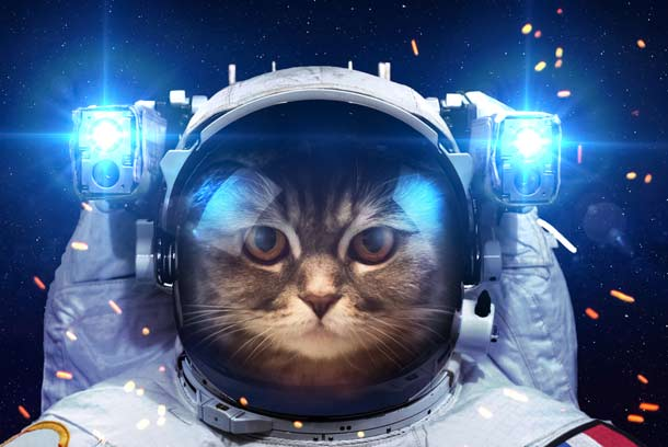 french cat astronaut