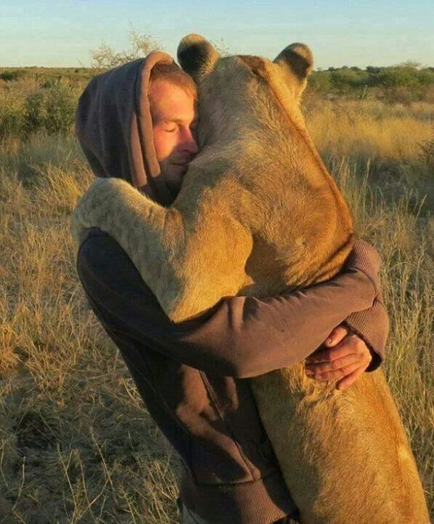 man and lioness