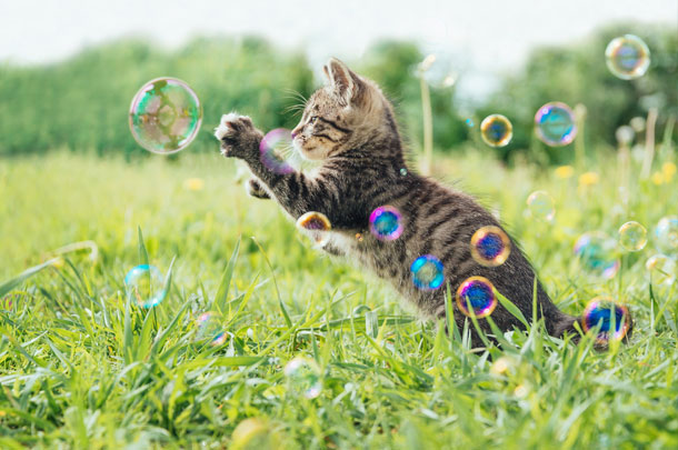 kitty and bubbles
