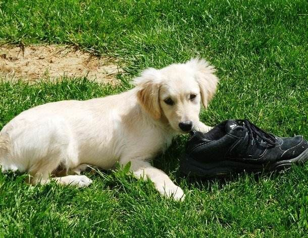 Chewed-up shoes