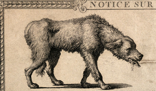 A_dog_with_rabies_and_a_detail_of_its_skull