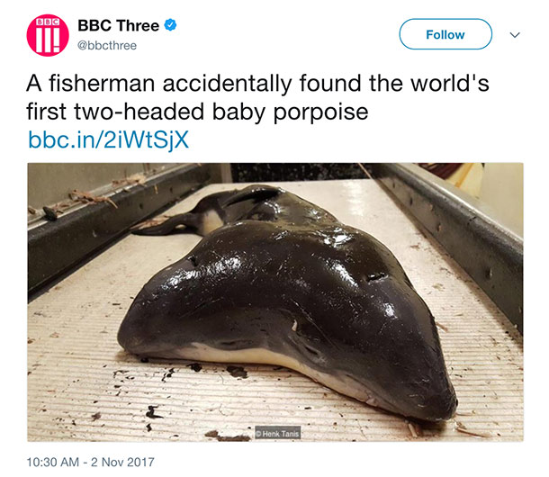 two headed porpoise