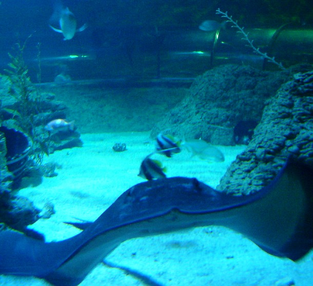 25 Largest Aquariums In The World