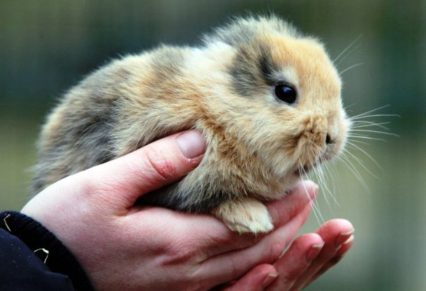 Rabbit with no ears