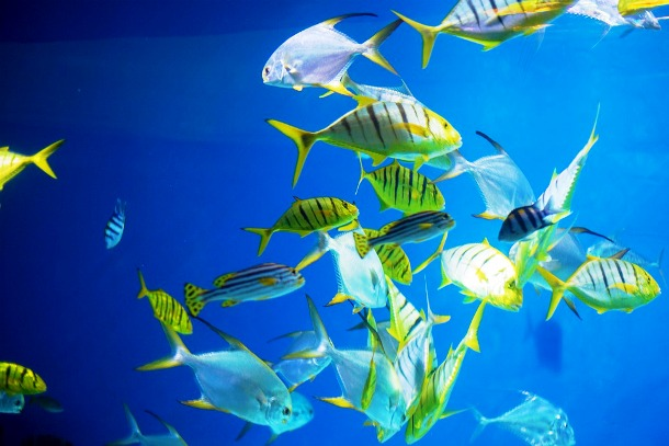 Moscow Oceanarium, Moscow, Russia