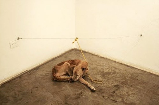 Guillermo Vargas starving dog
