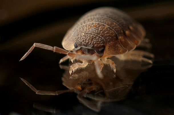 Insect-Worm-Bug-Armadillo
