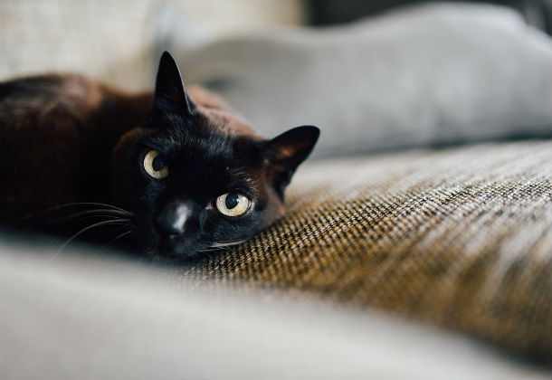 black cat on couch