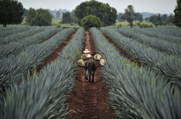 Tequila Tours – Jalisco