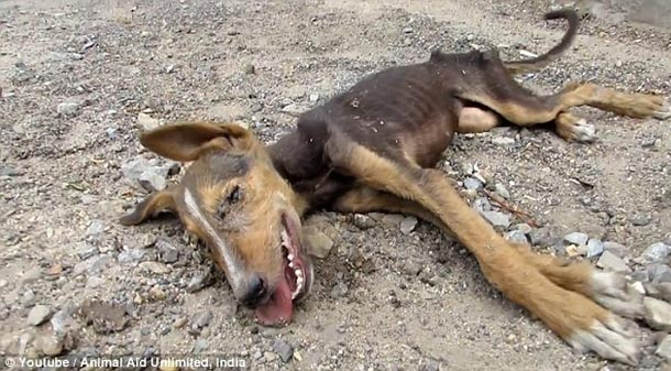 Dying puppy rescued by rescue team