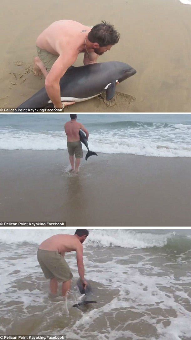 Naude Dreyer saves dolphin