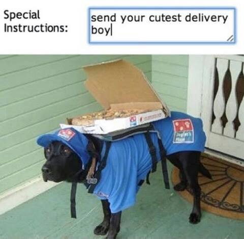 Dogdelivery