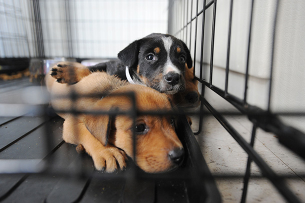 dogs at shelter