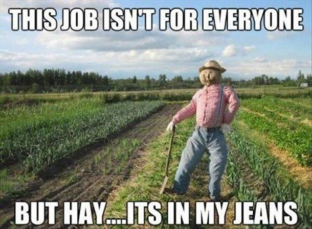 hay it's in my jeans