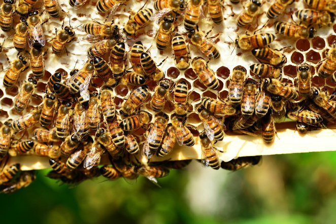 Bee-Hive-Insects-Yellow-Hive-Bees-Honey-Bees-401238